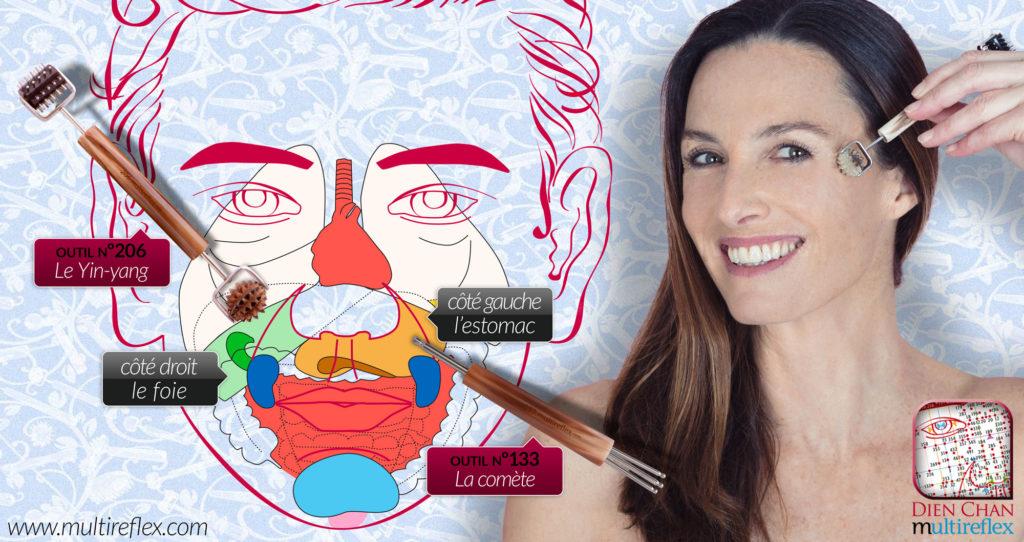 Schéma des organes internes