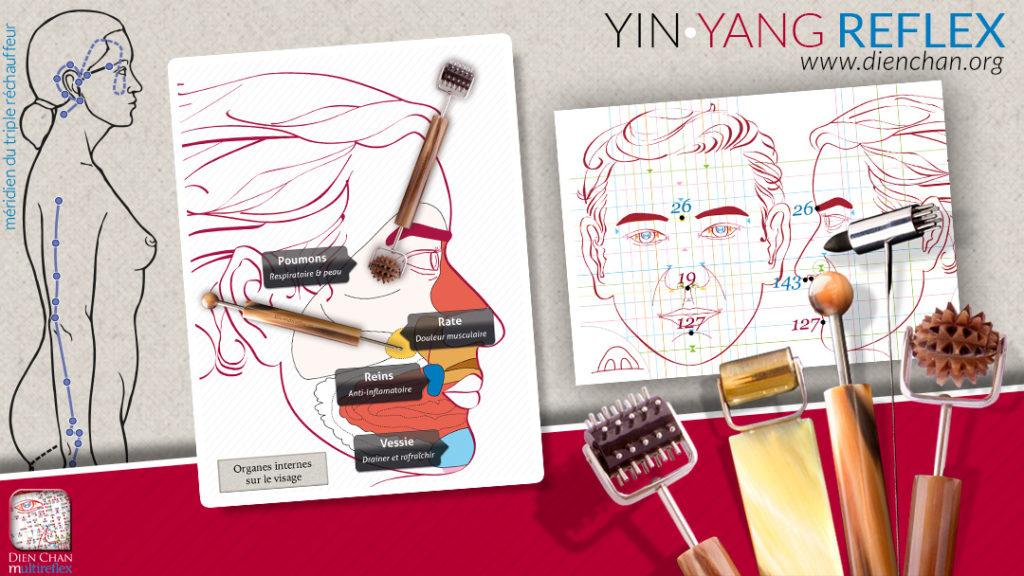 Yin et yang Dien Chan et schéma des organes internes